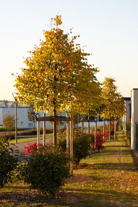 ARVAL architecture - Urbanisation du secteur Auguste Delaune – Gauchy - 6 ARVAL Secteur Auguste Delaune - image 5